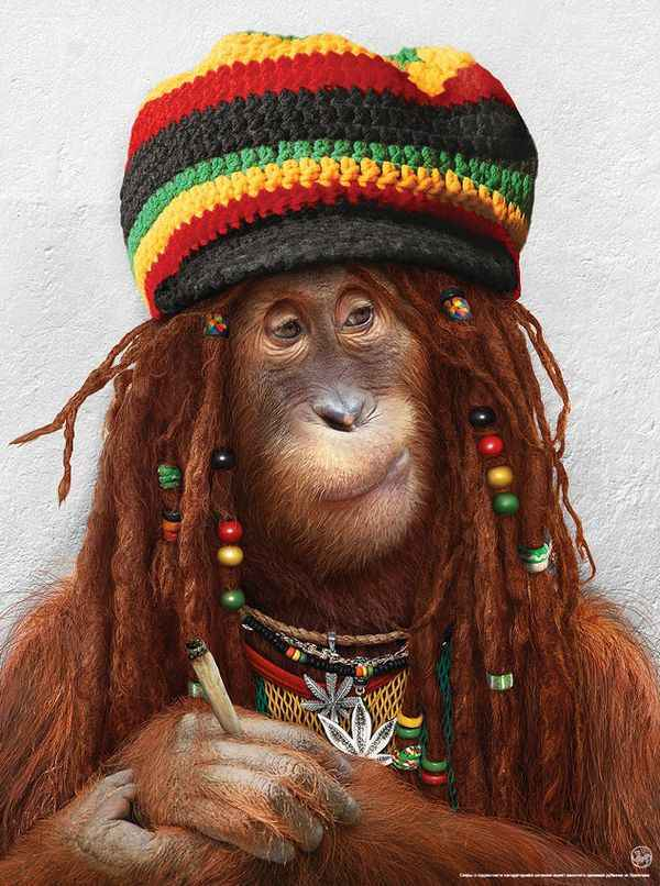 Noticias Curiosas - Mono Hippie
